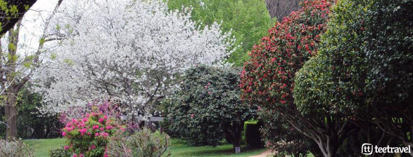 Ruta de la Camelia: Pazos y Jardines en las Rías Baixas - jardín