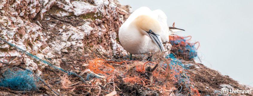 Día Mundial del Medio Ambiente - plásticos que inundan nuestras costas