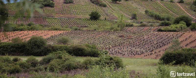 Caminando entre viñedos por el Camino de Invierno