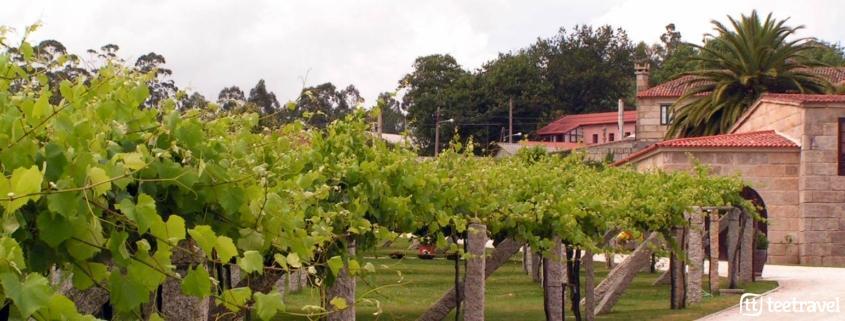 aminando entre viñedos por el Camino de Invierno