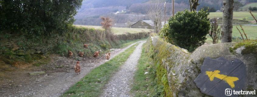 Que hacer en el Camino Primitivo: disfrutar del rural gallego