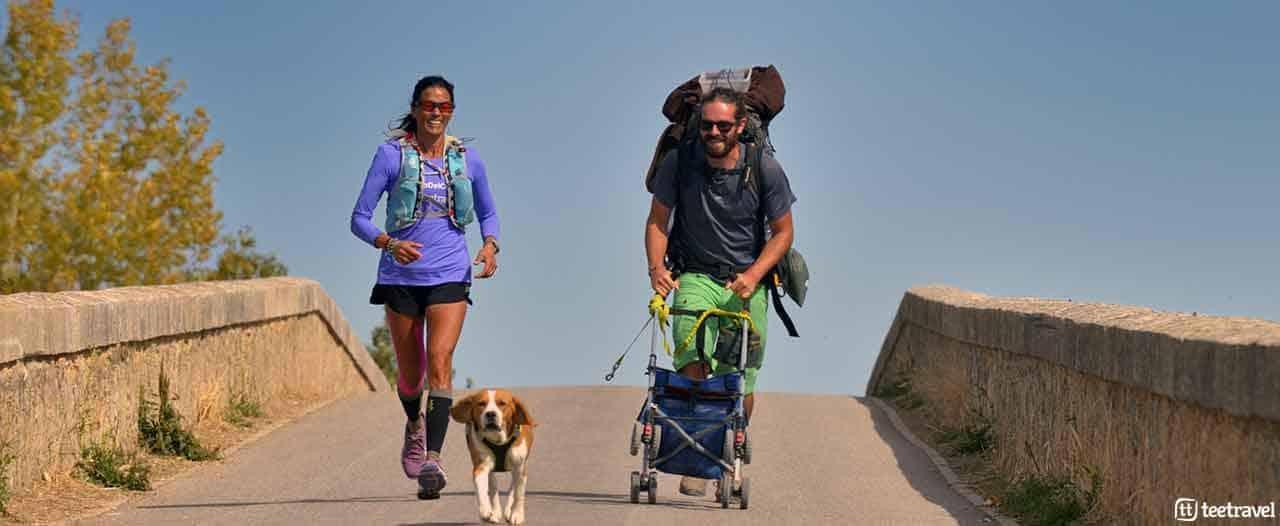 El Camino de Santiago con tu mascota