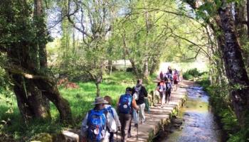 Hacer el Camino de Santiago organizado en grupo o solo
