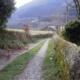 El primer peregrino - Camino Primitivo