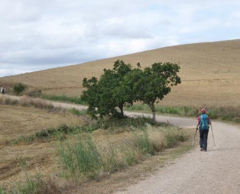 Donde empieza el Camino de Santiago