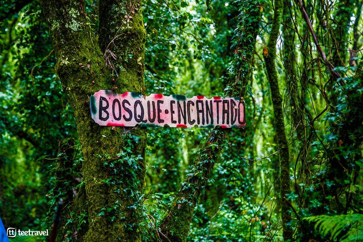 Camino Inglés - Betanzos - Bosque Encantado