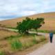 Camino de Santiago Francés - Etapa Roncesvalles-Logroño
