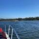 Traslatio - Ruta del Mar de Arousa y Río Ulla - El Origen