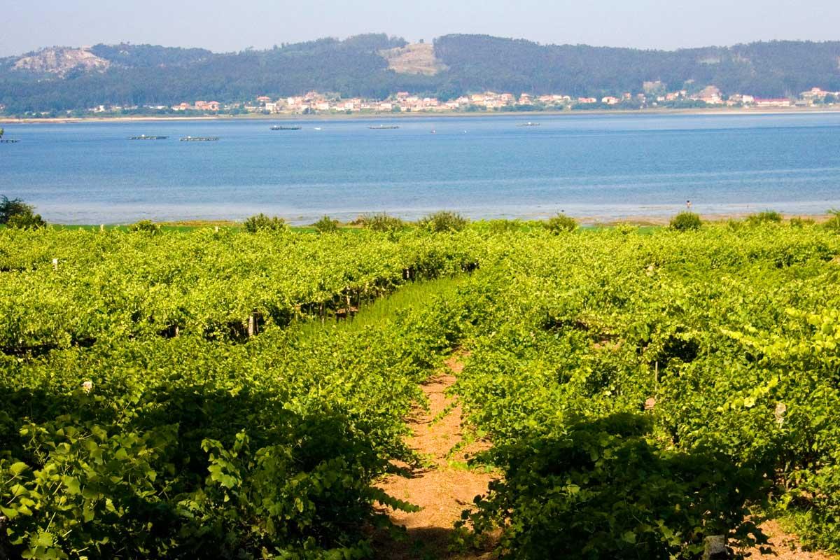 Rías Baixas - Viñedos de Vino Albariño
